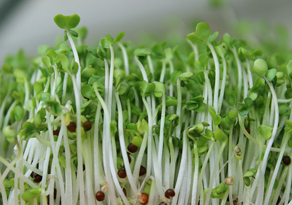 raw-vegan-diet-sprouts