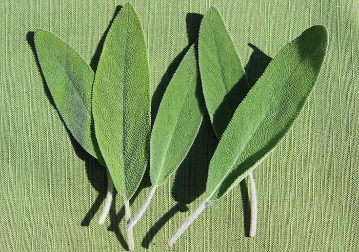 sage-leaves-benefits
