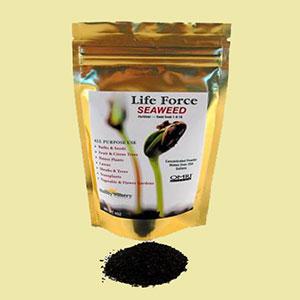 seaweed-fertilizer-wheatgrass-kits
