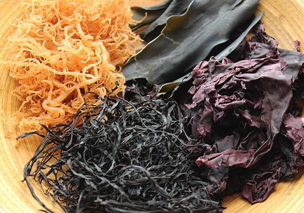 seaweed-home-page
