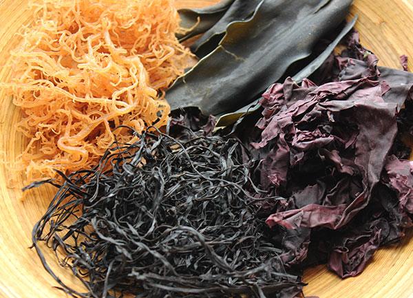 seaweed-nutrition