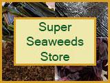 seaweed-store-logo-2