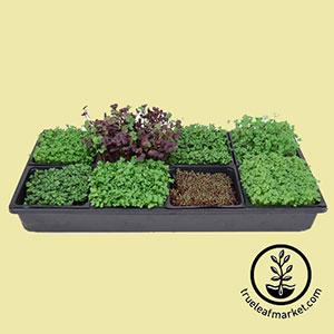 seeds-hydroponic-microgreens-starter-kit-growing-microgreens