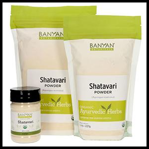shatavari-powder-banyan