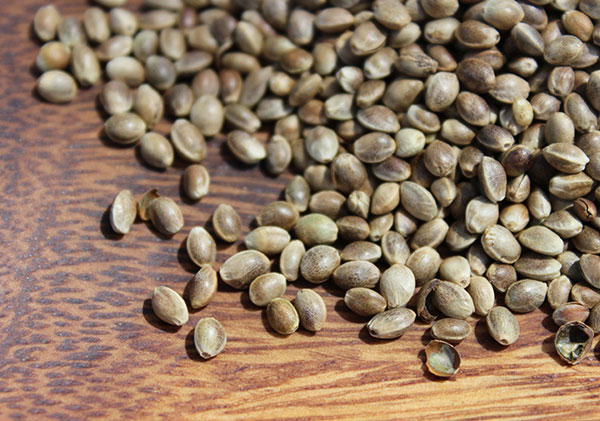 shelled-hemp-seeds