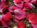 spices-and-herbs-rose-petals
