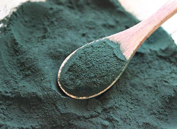 spirulina-cyanobacteria