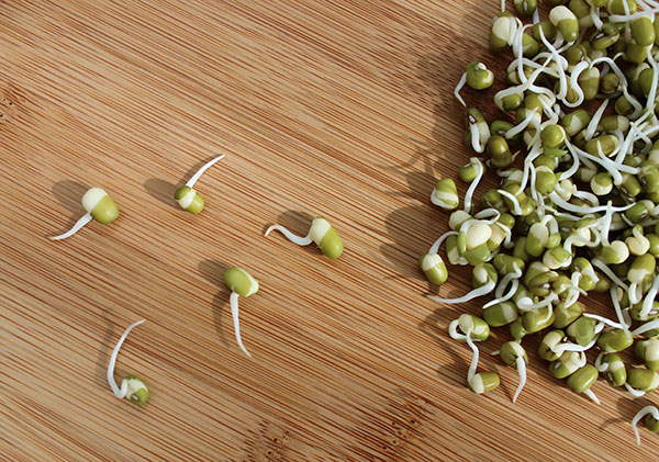 sprouted-green-mung-beans