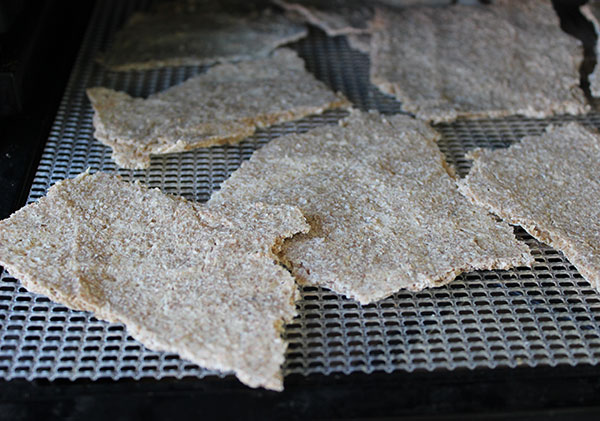 sprouted-rye-crackers-in-dehydrator