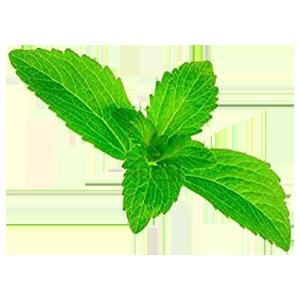 stevia-plant-3-inch-pot