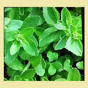 stevia-plant-amazon