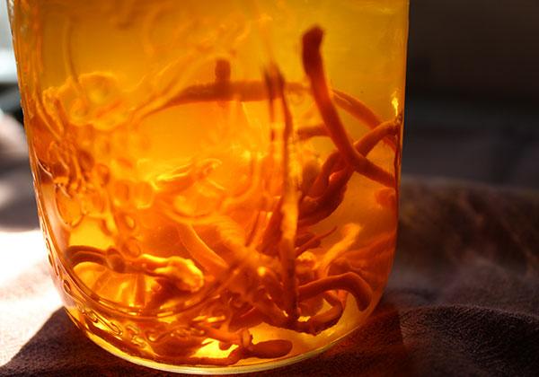 superfoods-list-cordyceps