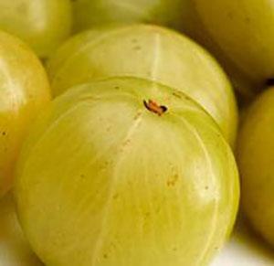 superfruits-amla-berries