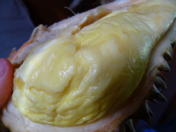 superfruits-durian-fruit