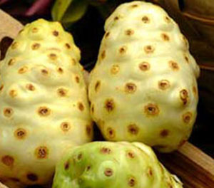 superfruits-noni-fruit