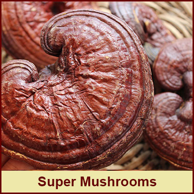 the-superfood-store-super-mushrooms-store
