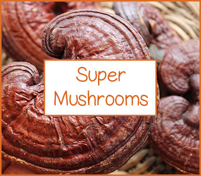 the-superfood-store-super-mushrooms
