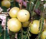 top-superfood-list-amla