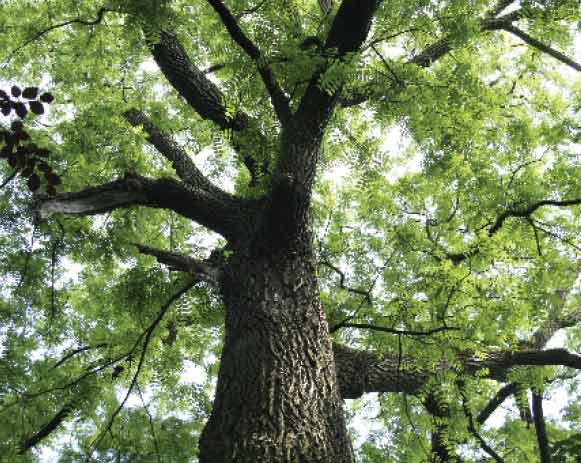 tree-nut