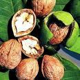 wild walnuts
