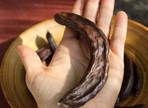 what-is-carob-Ceratonia-siliqua