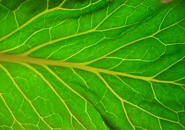 Health Benefits Of Chlorophyll Rich Superfoods
