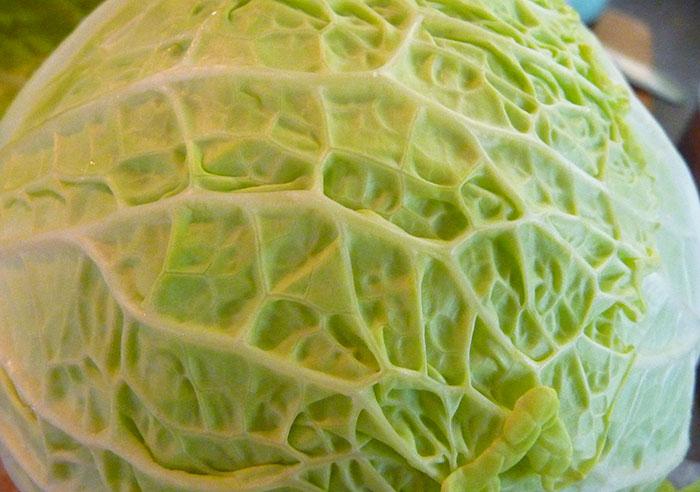 what-is-sauerkraut-cabbage-head