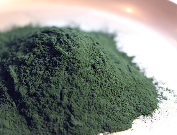 what-is-spirulina-cyanobacteria