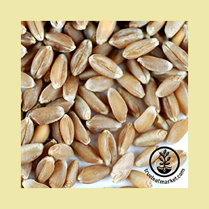 wheat-hard-red-seeds-wheatgrass-kits