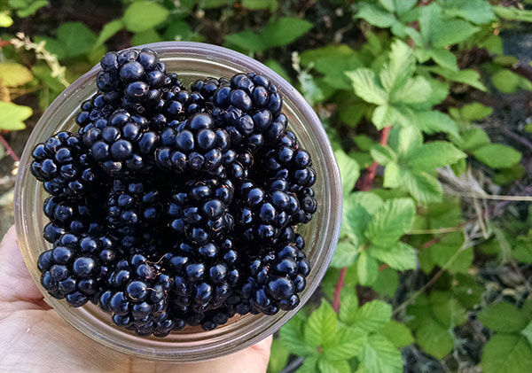 wild-blackberries-for-topping