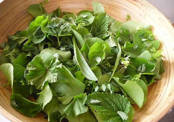 wild-edible-greens-salad