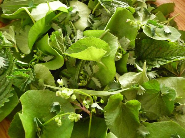 wild-edible-salad-greens