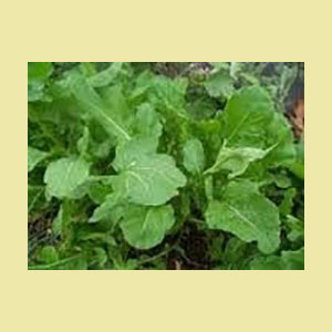 arugula-seeds-bulk-amazon