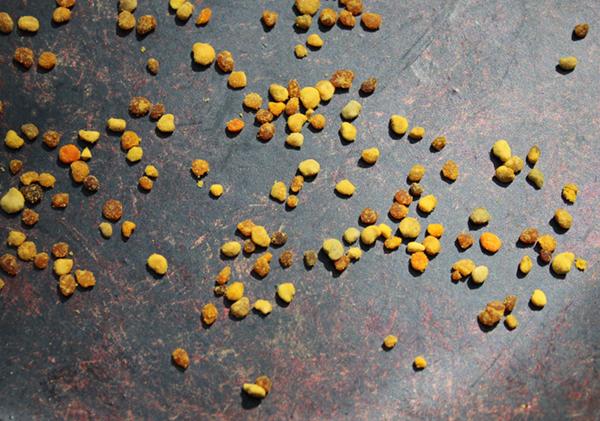 bee-pollen-granules-benefits