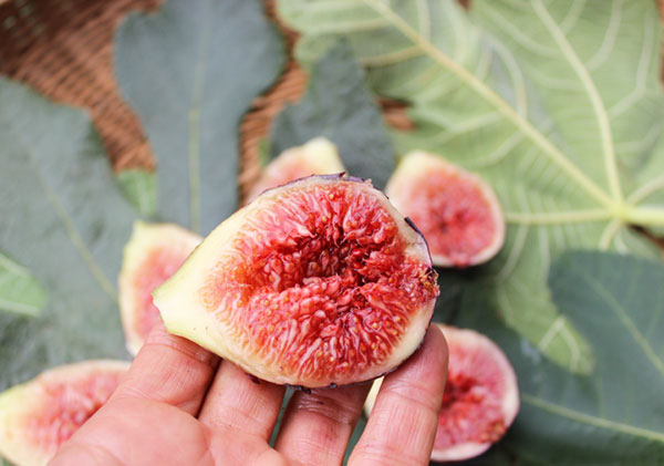 benefits-of-figs-ripe-fig