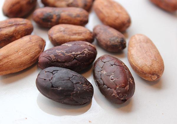cacao-recipes-cacao-beans