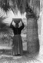 cahuilla-indians-palm-fruit-harvest