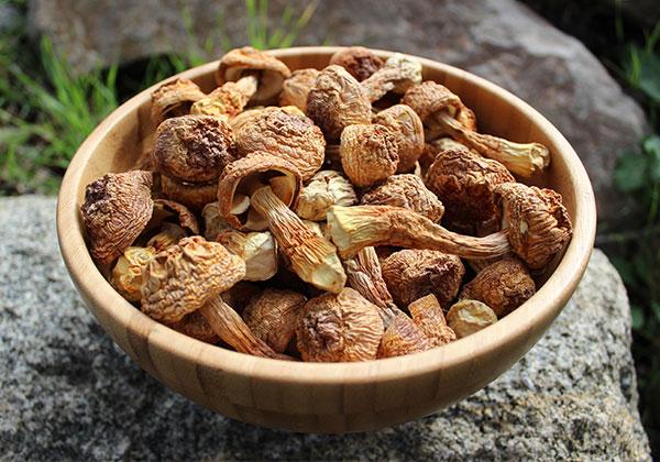 dried-agaricus-blazei-bowl