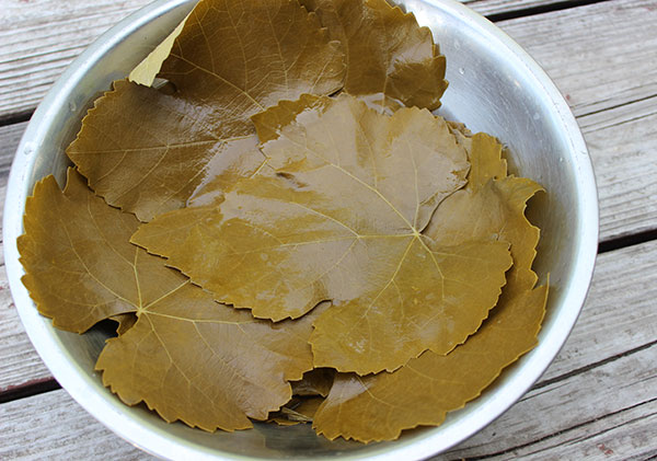 fermented-grape-leaves-for-dolma-recipe