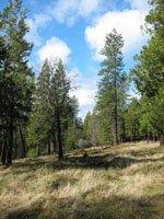 wildcrafting wild foods forest
