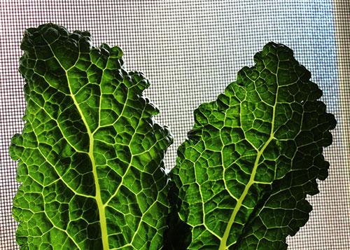 green-juice-benefits-green-leafy-vegetables