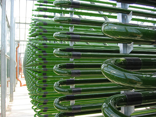 growing-marine-phytoplankton