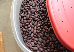 homemade-tempeh-recipe-whole-beans