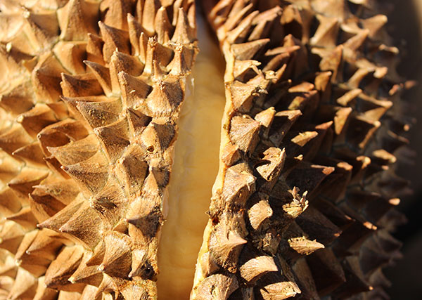 how-to-open-a-durian