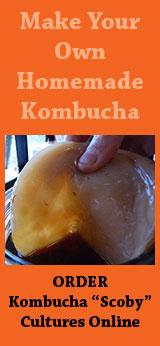 kombucha-cultures-banner