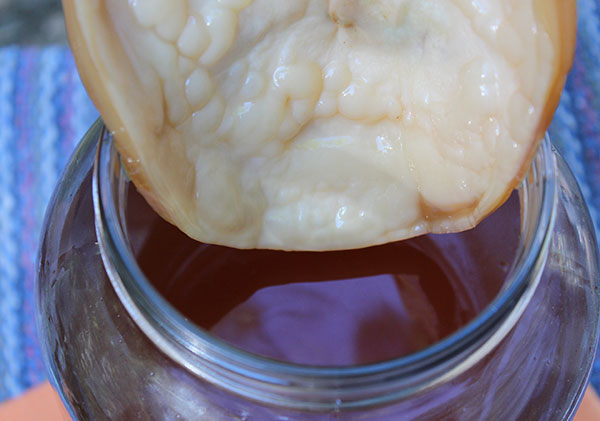 kombucha-scoby-in-tea-jar