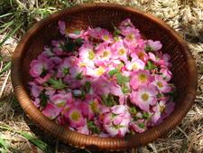 list-of-edible-flowers-rose