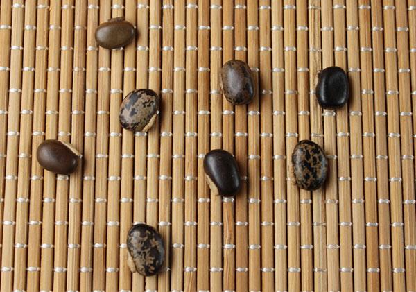 mucuna-pruriens-benefits-mucuna-beans