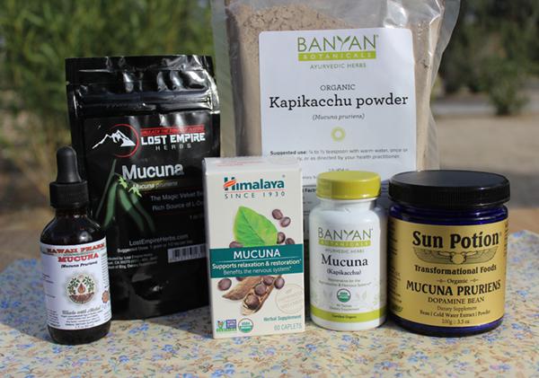mucuna-pruriens-benefits-organic-suppliers