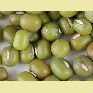 mung-bean-sprout-seeds-wheatgrass-kits